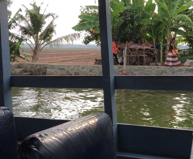 Backwater paddy